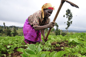 Woman farming Sierra Leone